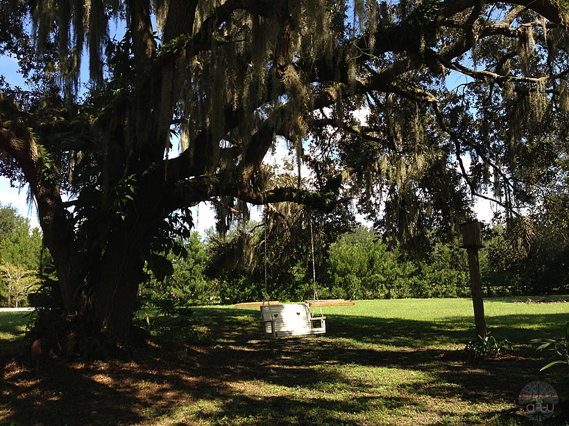 Anderson Homestead swing