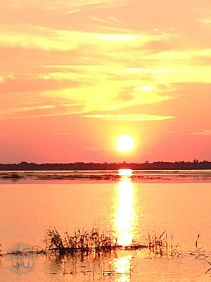 The Myakka River Sunset